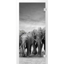 Elefanten Fotoprint Glastür - Erkelenz